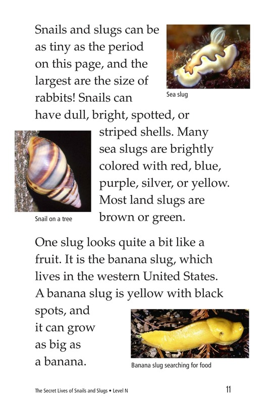 Book Preview For The Secret Lives of Snails and Slugs Page 11