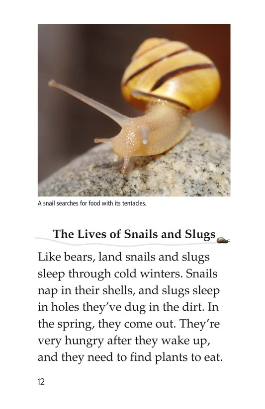 Book Preview For The Secret Lives of Snails and Slugs Page 12