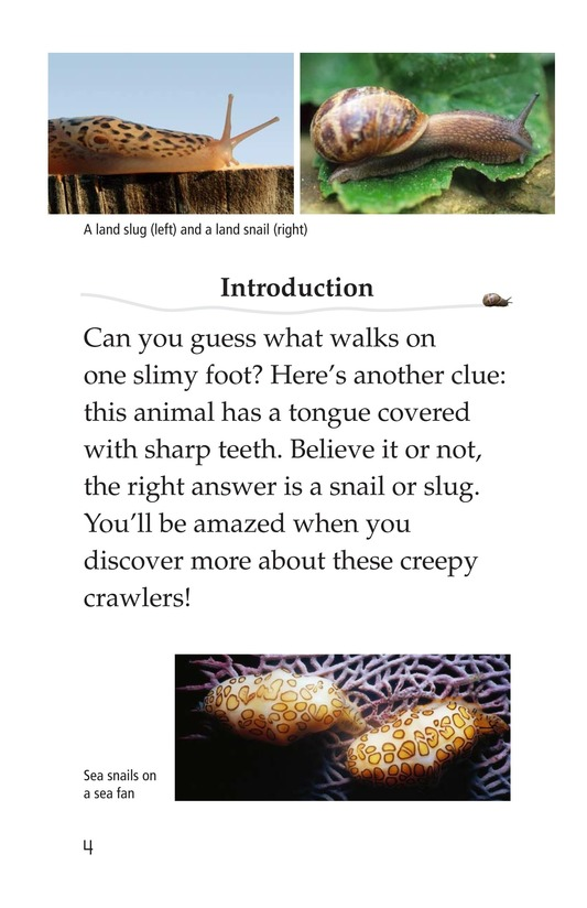 Book Preview For The Secret Lives of Snails and Slugs Page 4