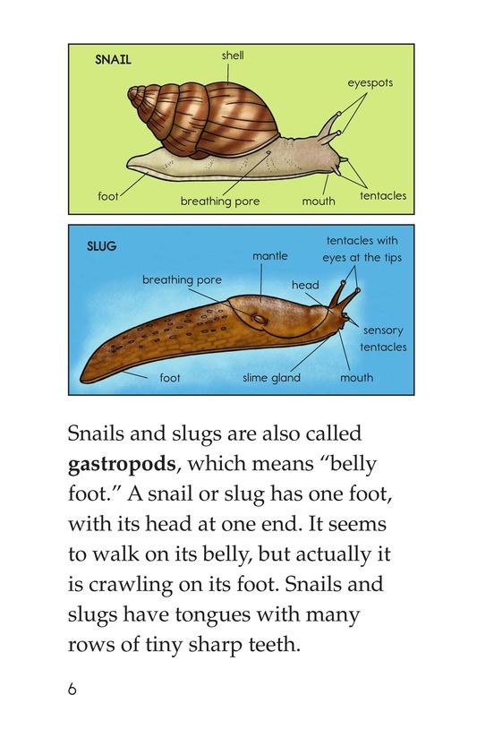 Book Preview For The Secret Lives of Snails and Slugs Page 6