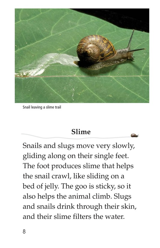 Book Preview For The Secret Lives of Snails and Slugs Page 8