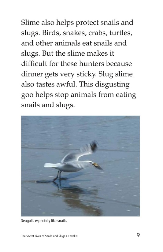 Book Preview For The Secret Lives of Snails and Slugs Page 9