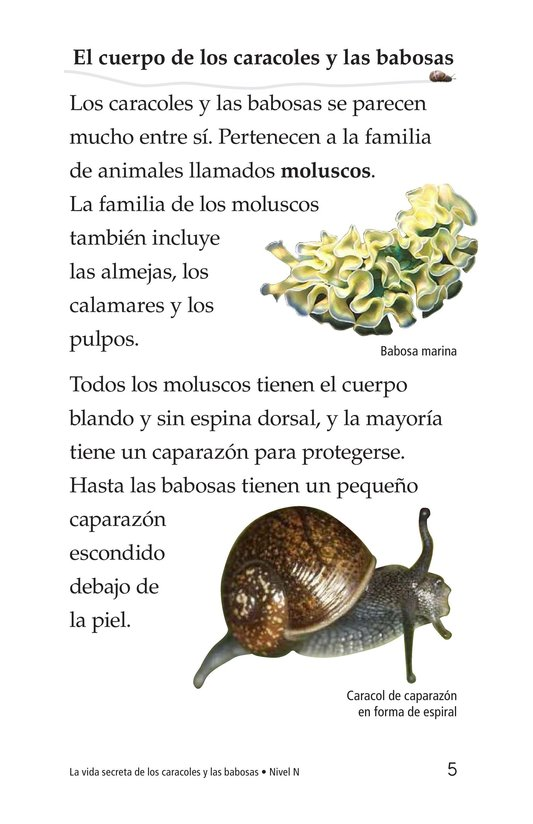 Book Preview For The Secret Lives of Snails and Slugs Page 5