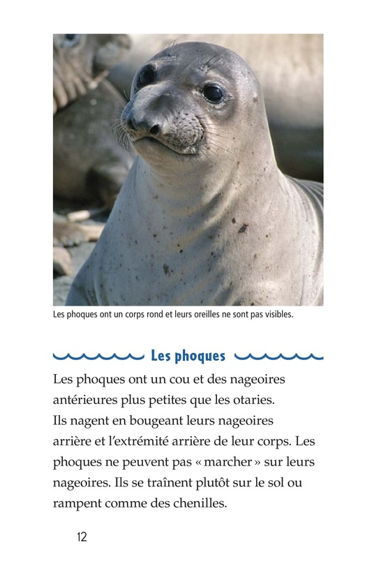 Book Preview For Seals, Sea Lions, and Walruses Page 12