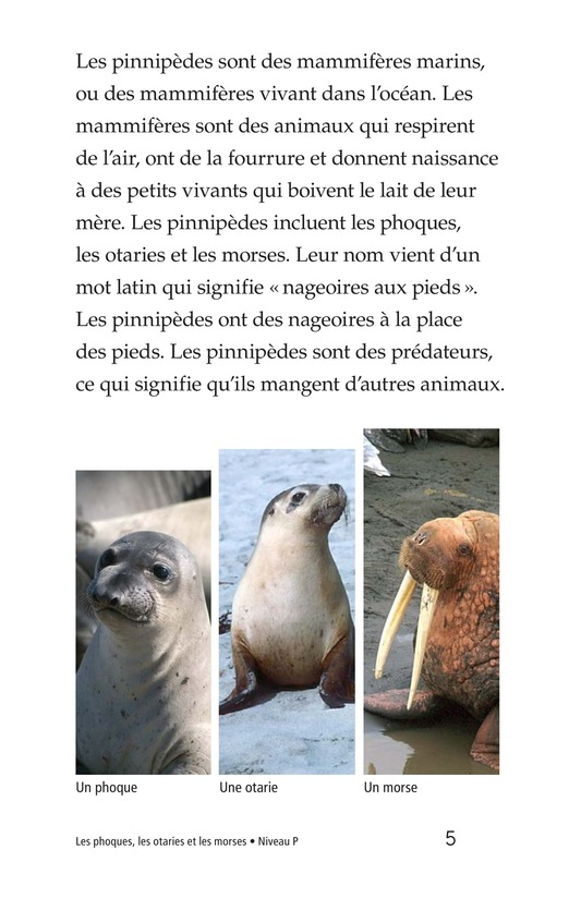 Book Preview For Seals, Sea Lions, and Walruses Page 5