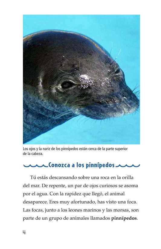 Book Preview For Seals, Sea Lions, and Walruses Page 4