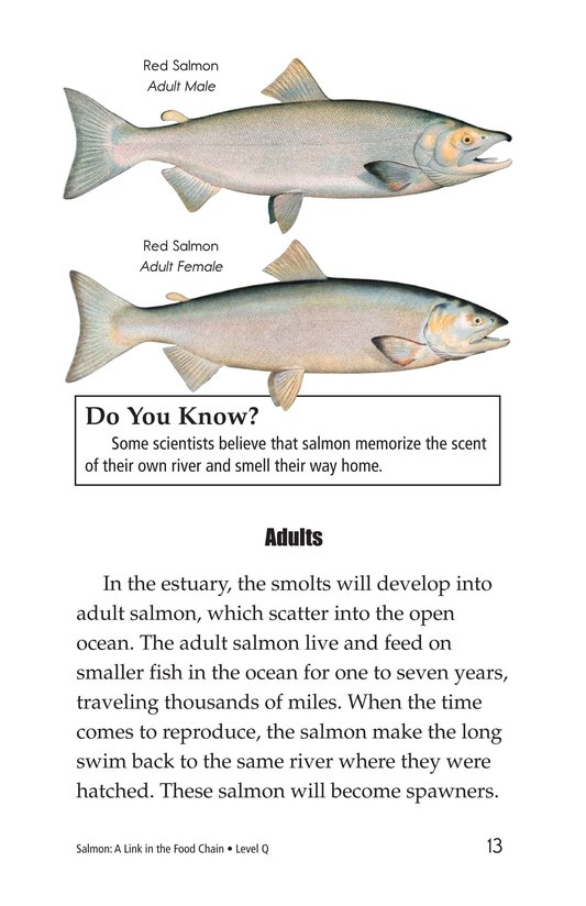 Book Preview For Salmon: A Link in the Food Chain Page 13