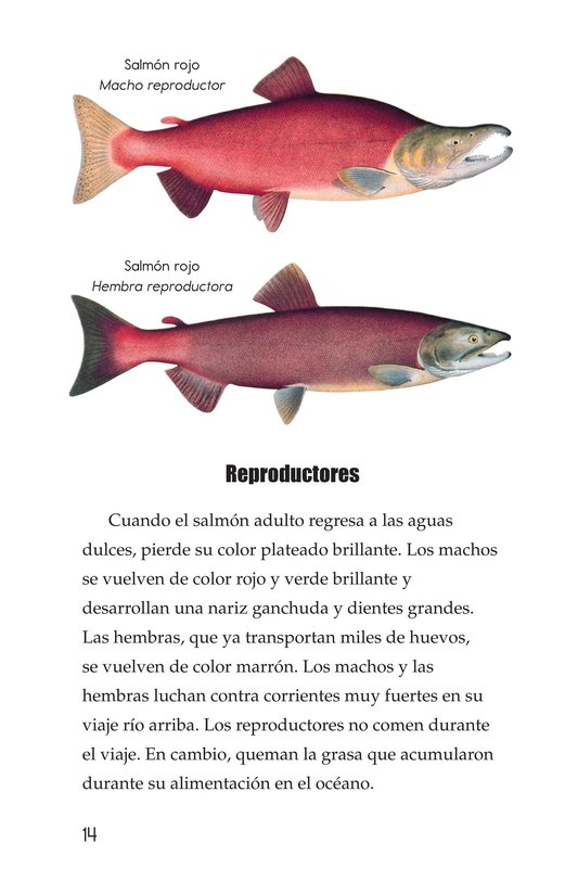 Book Preview For Salmon: A Link in the Food Chain Page 14