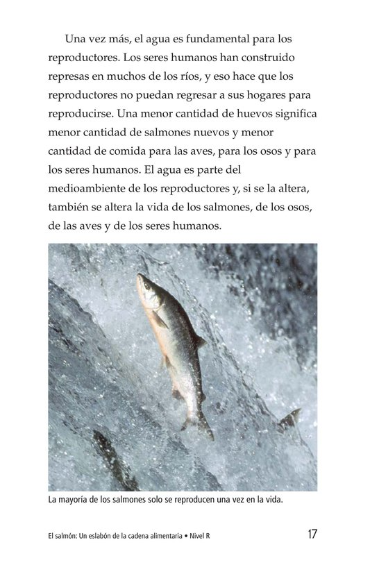 Book Preview For Salmon: A Link in the Food Chain Page 17