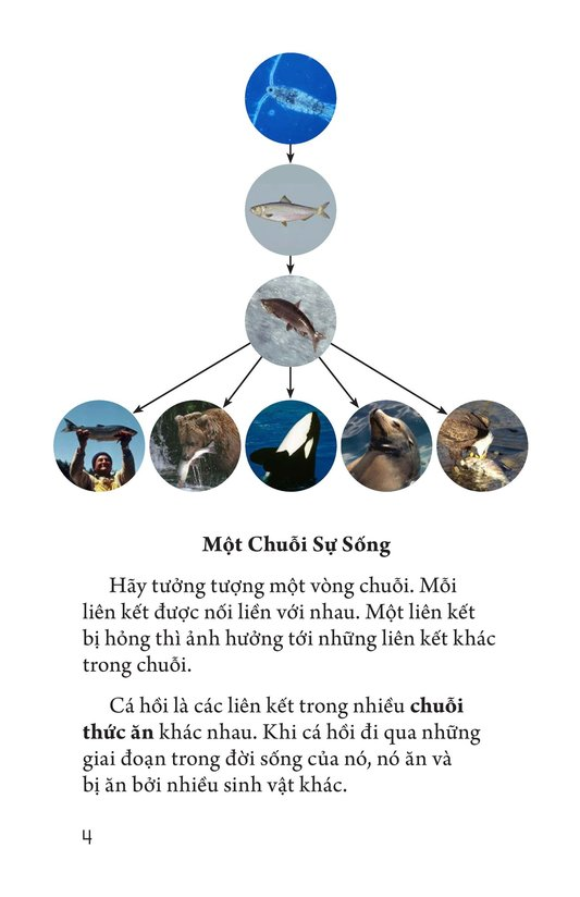 Book Preview For Salmon: A Link in the Food Chain Page 4