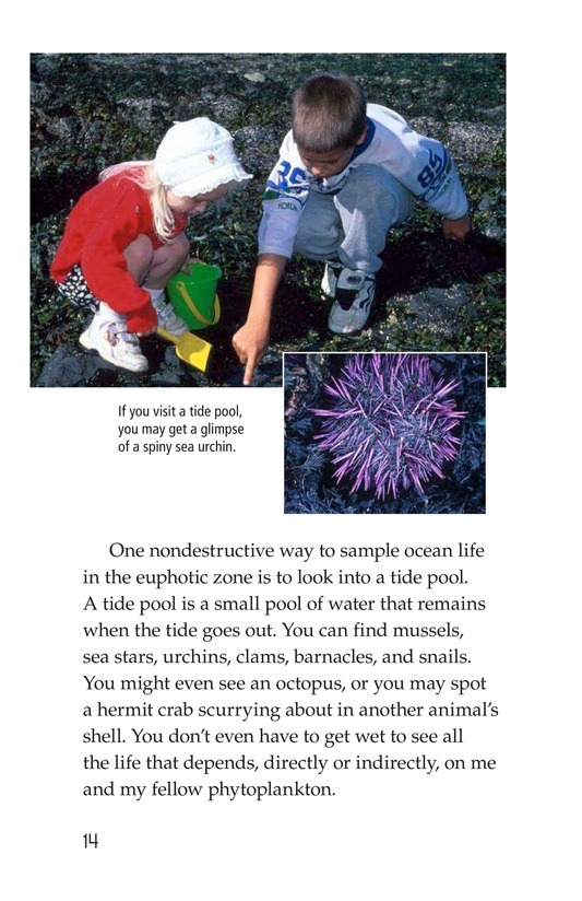 Book Preview For The Amazing Undersea Food Web Page 14