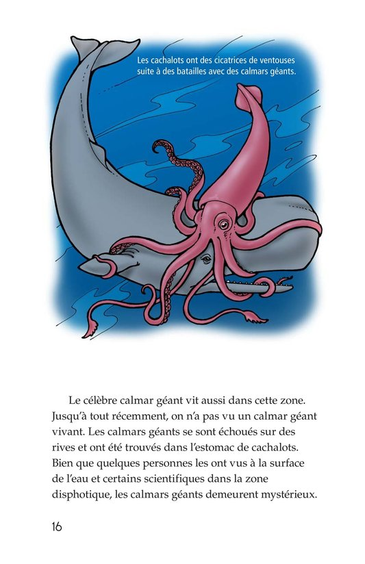 Book Preview For The Amazing Undersea Food Web Page 16
