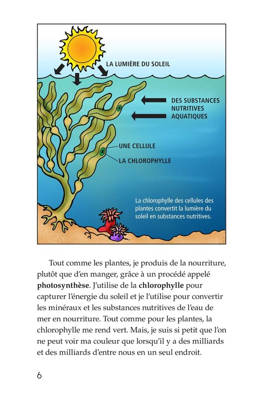 Book Preview For The Amazing Undersea Food Web Page 6