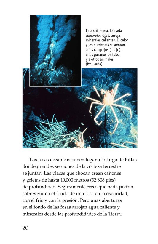 Book Preview For The Amazing Undersea Food Web Page 20