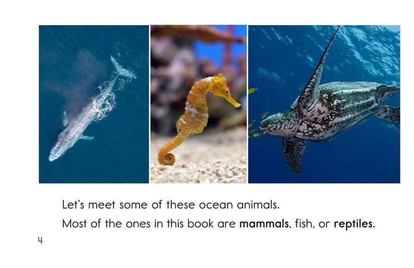 Book Preview For Ocean Animals Page 4