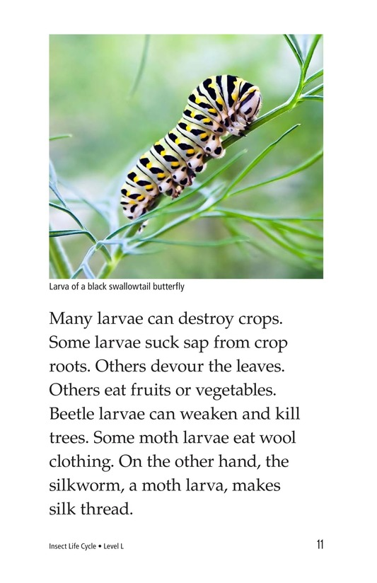 Book Preview For Insect Life Cycle Page 11