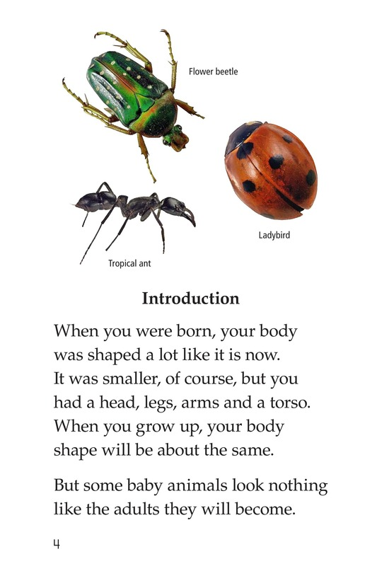 Book Preview For Insect Life Cycle Page 4