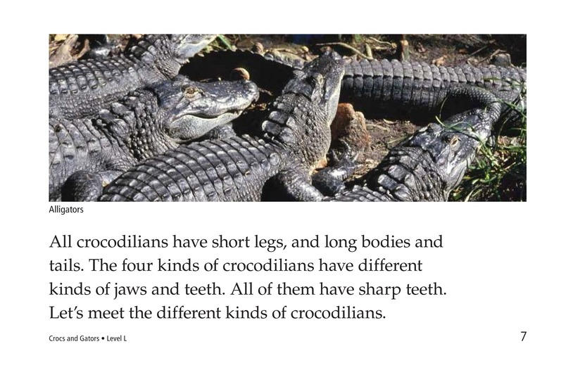 Book Preview For Crocs and Gators Page 7