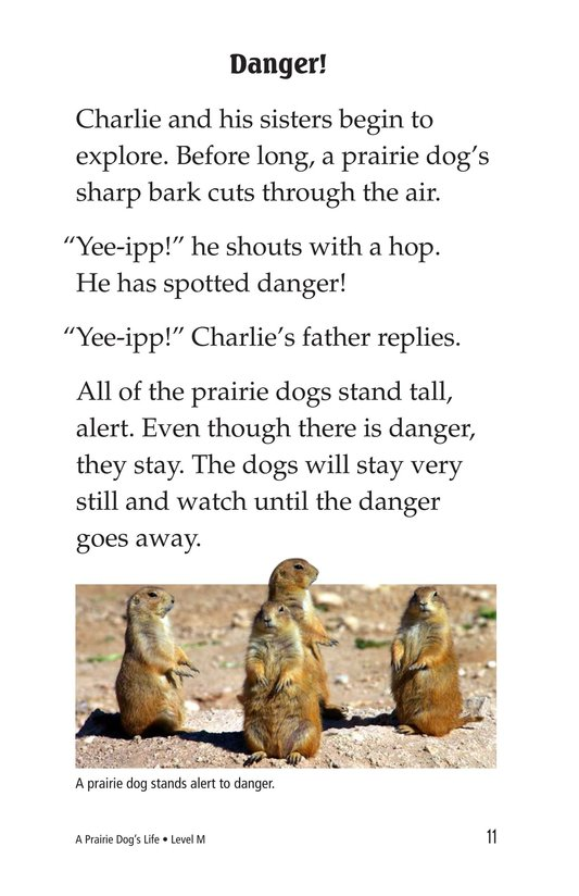 Book Preview For A Prairie Dog's Life Page 11