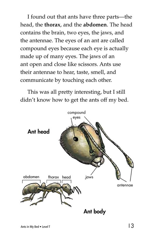 Book Preview For Ants in My Bed Page 13