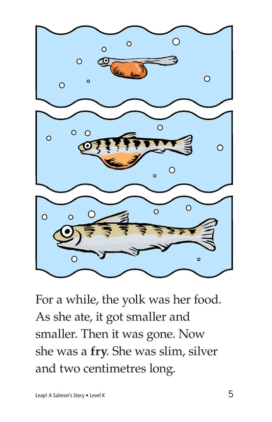 Book Preview For Leap! A Salmon's Story Page 5