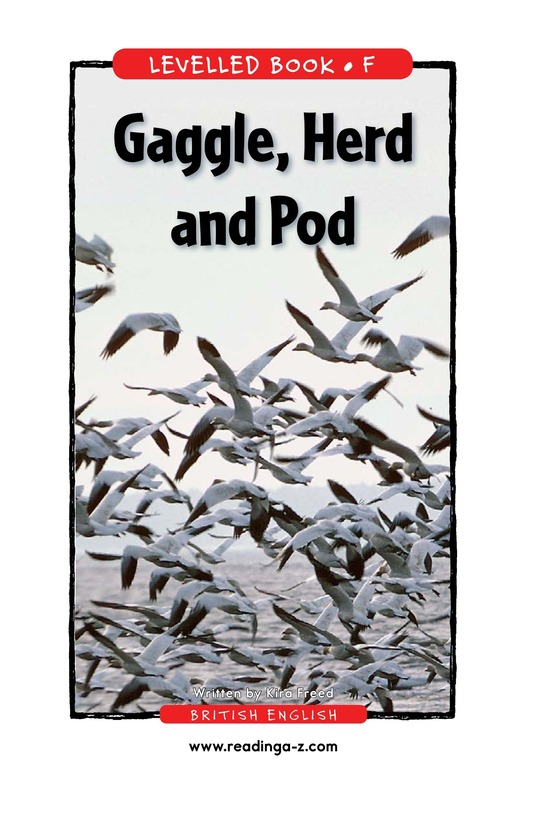 Book Preview For Gaggle, Herd, and Pod Page 1
