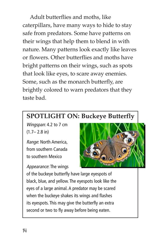 Book Preview For Butterflies and Moths Page 14