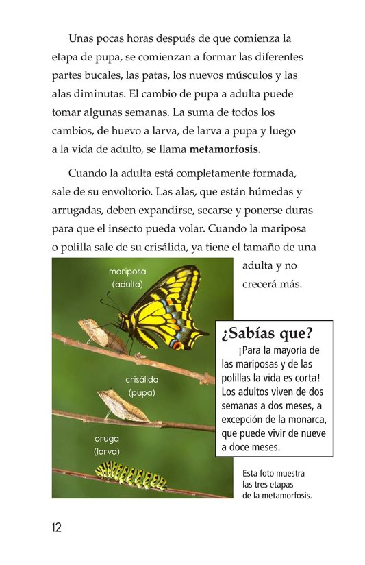 Book Preview For Butterflies and Moths Page 12