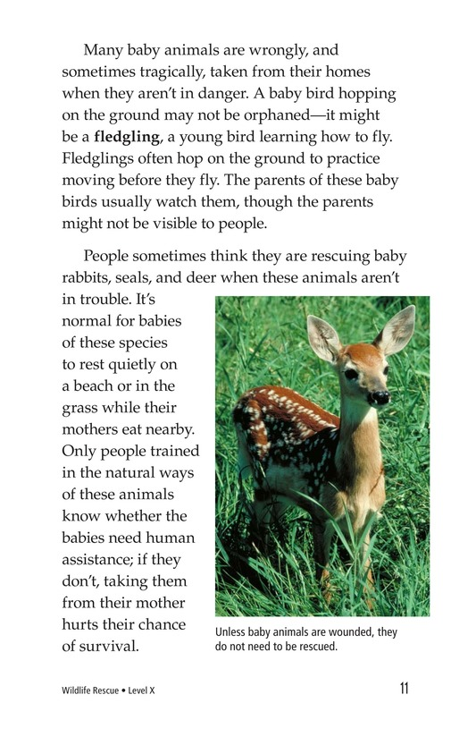 Book Preview For Wildlife Rescue Page 11