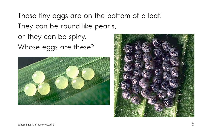 Book Preview For Whose Eggs Are These? Page 5