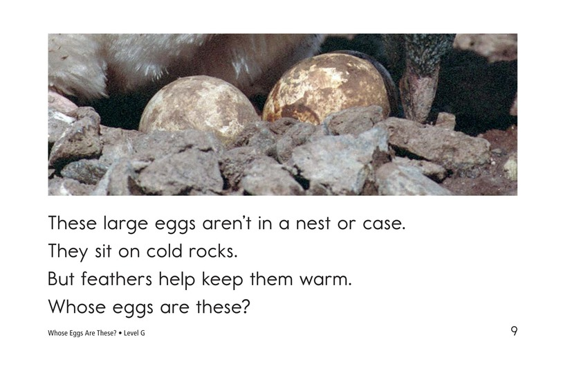 Book Preview For Whose Eggs Are These? Page 9