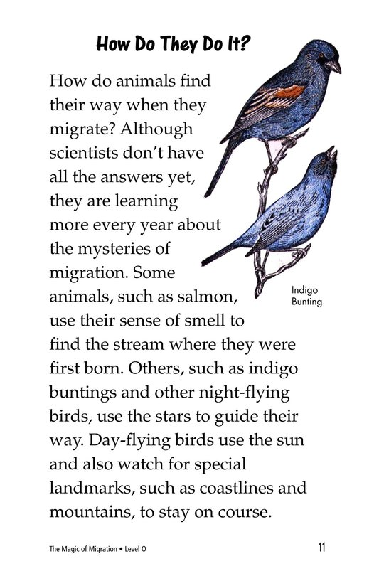 Book Preview For The Magic of Migration Page 11