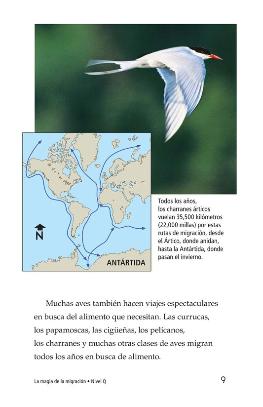 Book Preview For The Magic of Migration Page 9