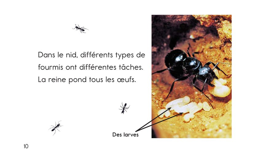 Book Preview For Ants, Ants, and More Ants Page 10