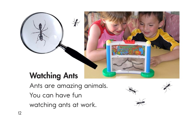 Book Preview For Ants, Ants, and More Ants Page 12