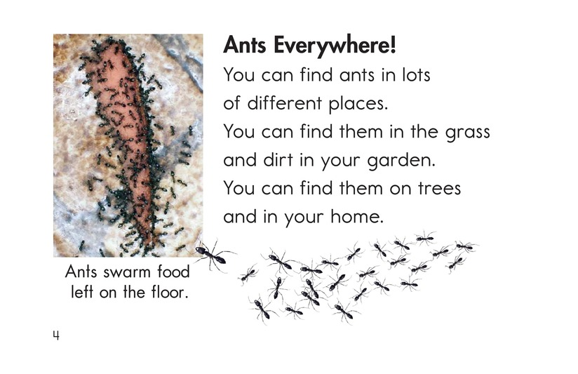 Book Preview For Ants, Ants, and More Ants Page 4