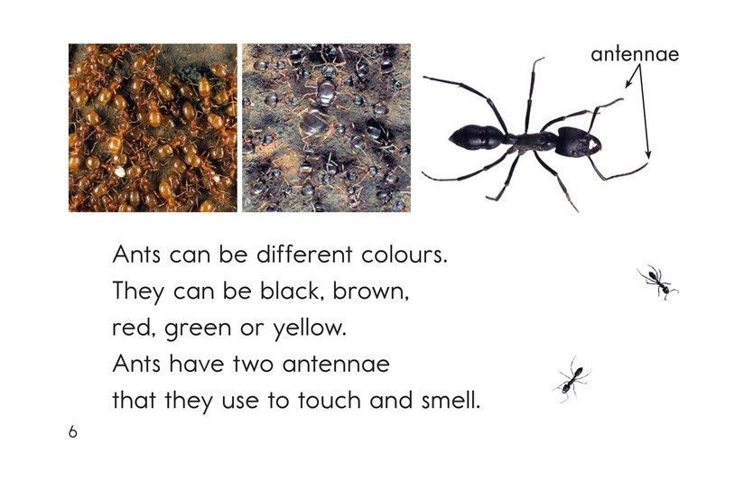Book Preview For Ants, Ants, and More Ants Page 6