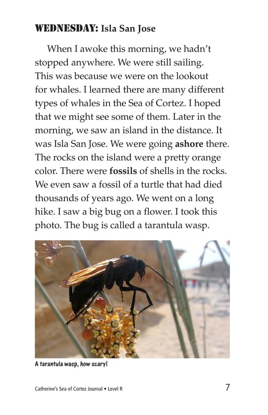 Book Preview For Charlene's Sea of Cortez Journal Page 7