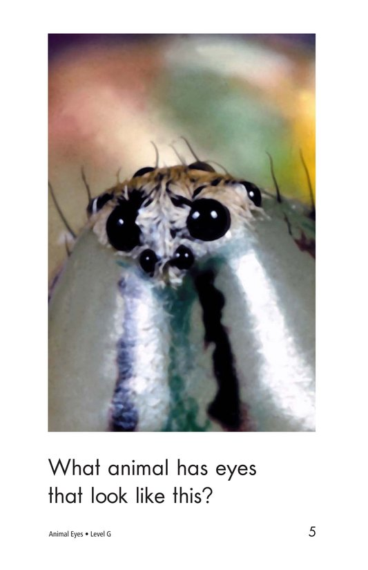 Book Preview For Animal Eyes Page 5