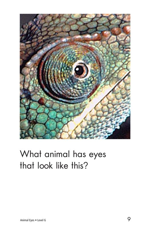Book Preview For Animal Eyes Page 9