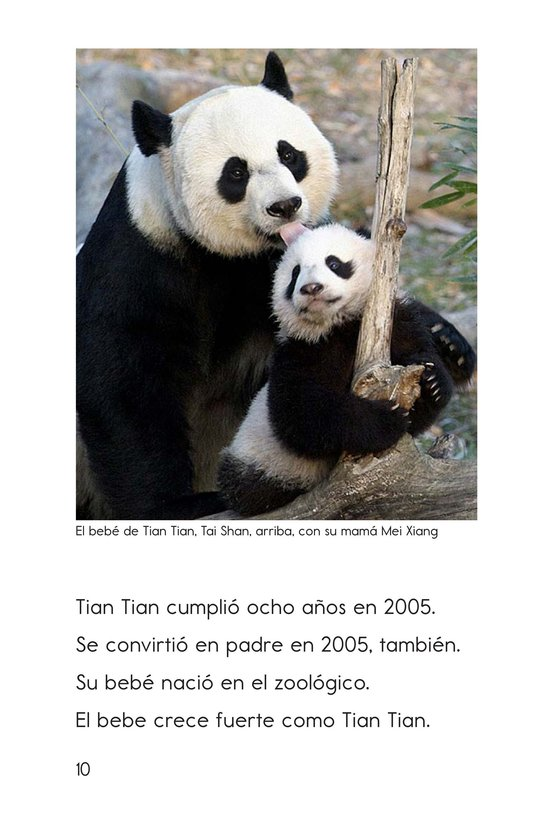 Book Preview For Tian Tian, a Giant Panda Page 10
