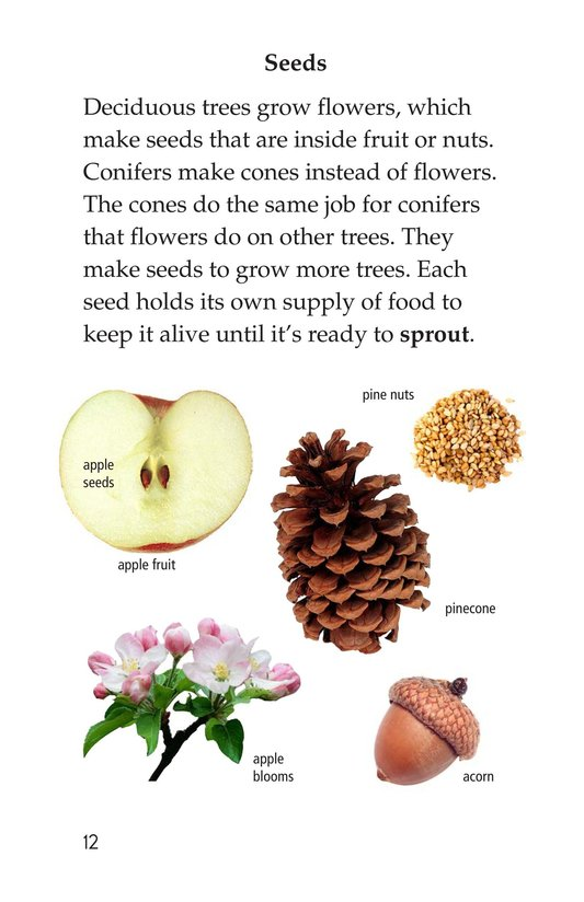 Book Preview For About Trees Page 12
