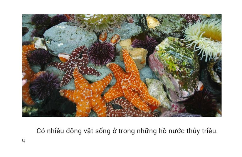 Book Preview For Shapes in Tide Pools Page 4