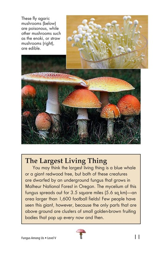 Book Preview For Fungus Among Us Page 11