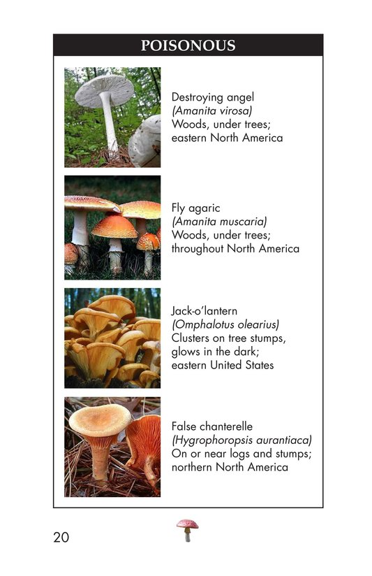 Book Preview For Fungus Among Us Page 20