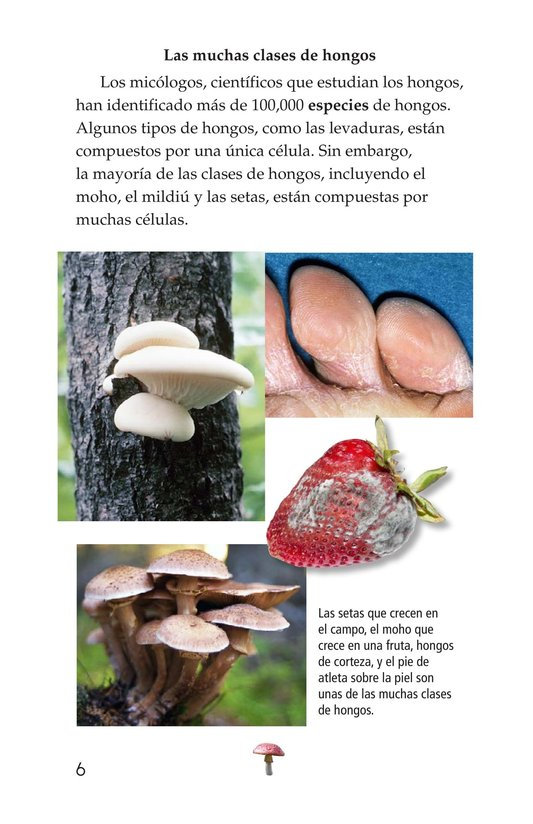 Book Preview For Fungus Among Us Page 6