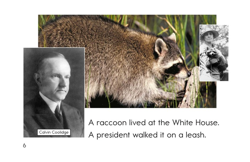 Book Preview For Weird White House Pets Page 6
