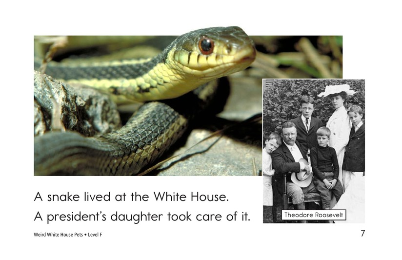 Book Preview For Weird White House Pets Page 7