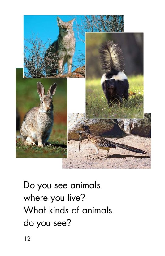 Book Preview For Country Animals Page 12